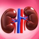 ¿Qué es y qué sucede cuando hay Nefropatía Diabética o Daño Renal?